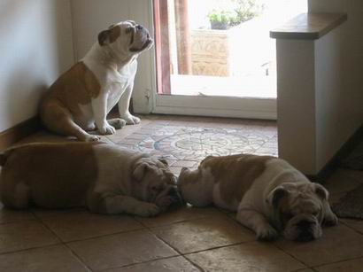 3-Brothers-Snow-Angel-Bulldogs